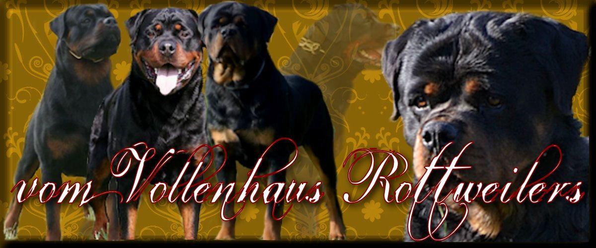 Vom Vollenhaus Rottweilers Rottweiler Rottweiler Puppies Rottweiler Breeders German Rottweiler Puppies Rotti Ger Cutest Dog Ever Rottweiler Puppies Rottweiler