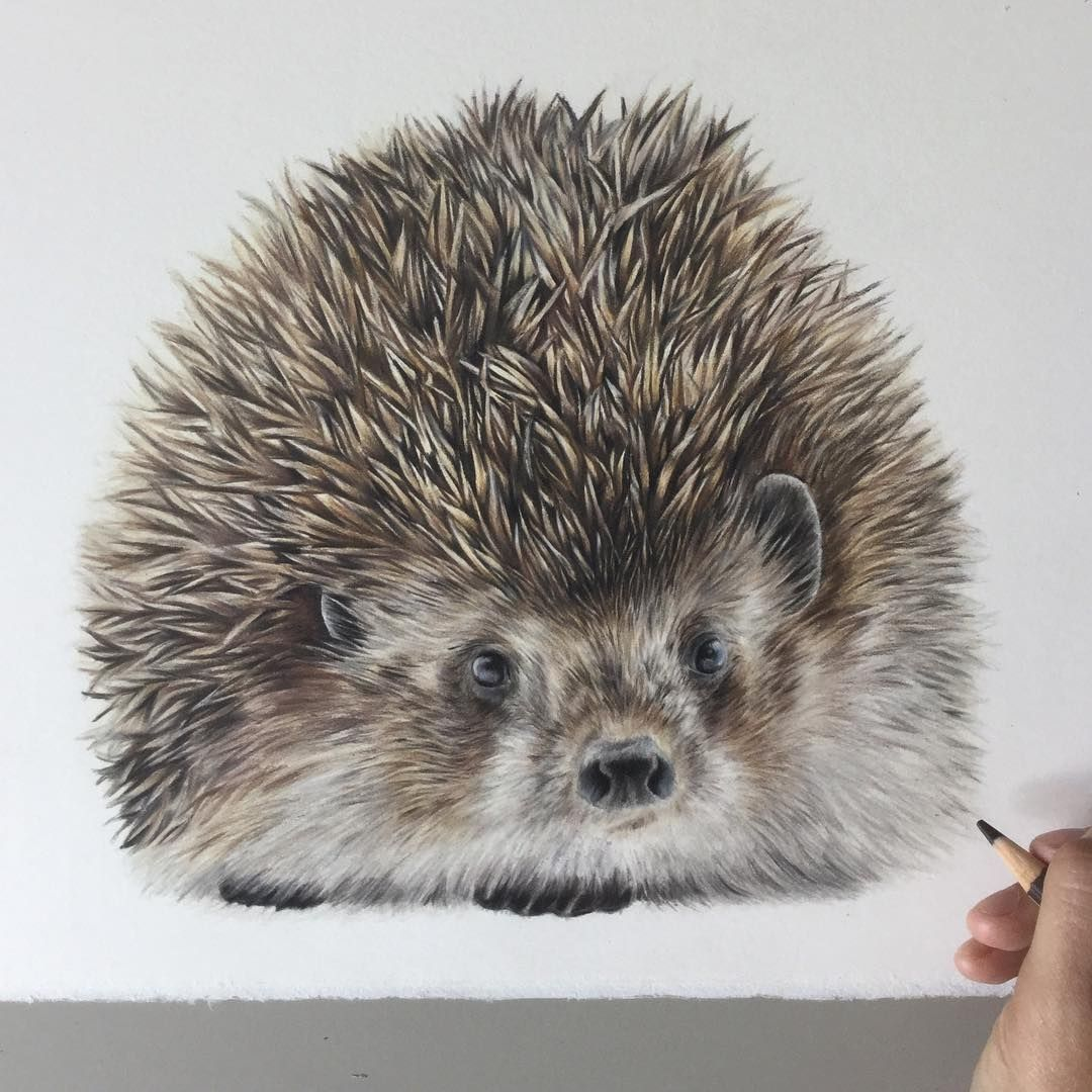 Colored Pencils Realistic Animal Drawings