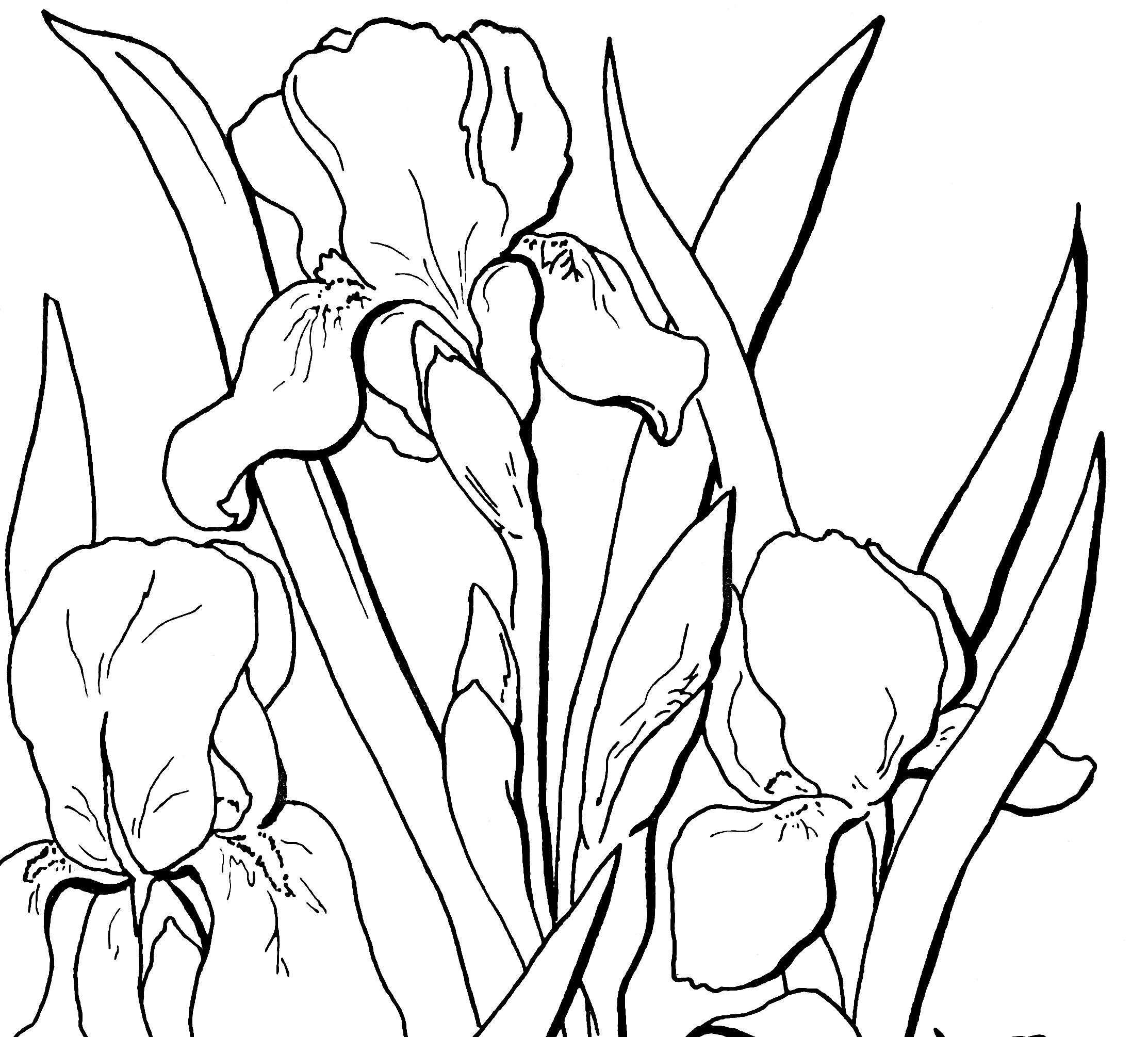 10 floral adult coloring pages with images watercolor