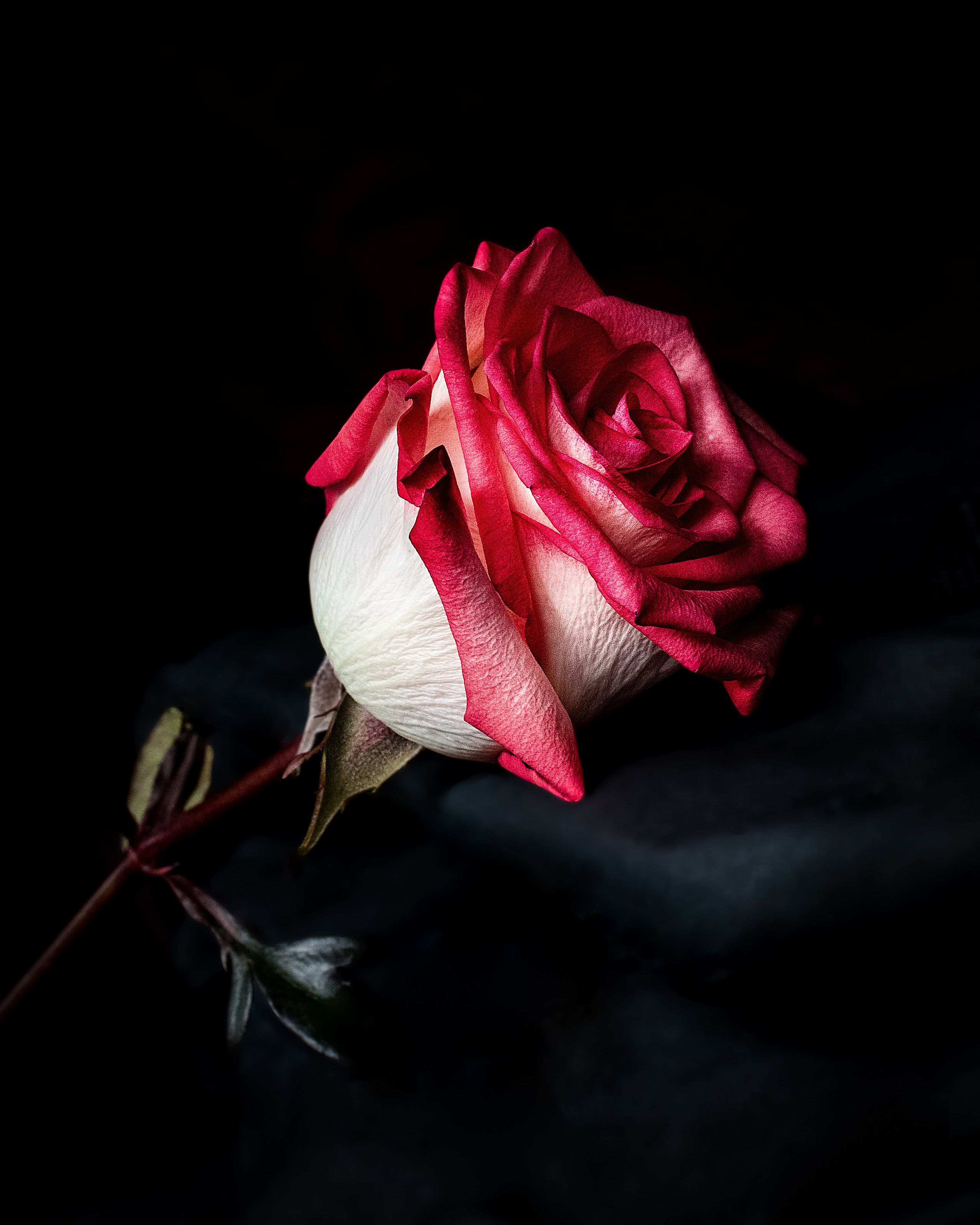 Luxury Roses Delivery Long Stem Roses In A Box Rose Flower Wallpaper Beautiful Roses Beautiful Red Roses
