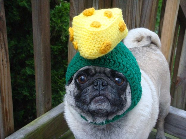The 30 Unhappiest Etsy Pug Models Pugs Cute Animals Wisconsin