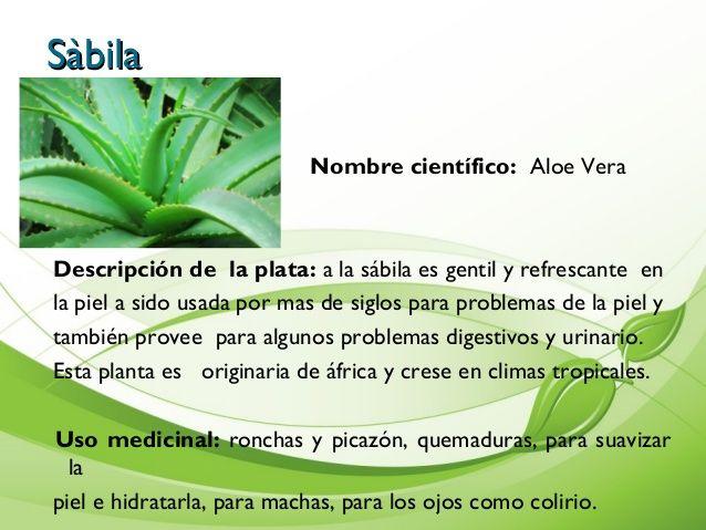 10 plantas medicinales y para que sirven con nombre cientifico