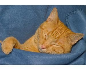 Enjoyable How To Remove Cat Urine From Leather Furniture Scrub It Creativecarmelina Interior Chair Design Creativecarmelinacom