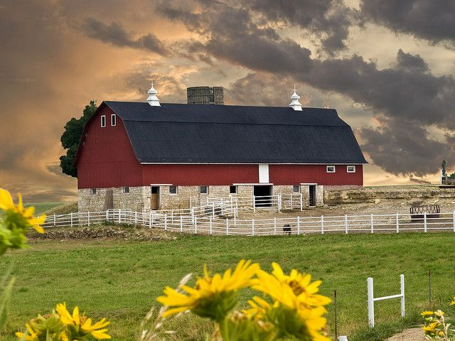 Barn near Blue Rapids, KS - It is great because it even has sunflowers in the picture, Kansas state flower.