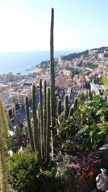 Monaco Jardin Exotique Garden Landscaping Garden Landscape
