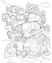 Bildergebnis Fur Malvorlagen Unterwasserwelt Malvorlagen