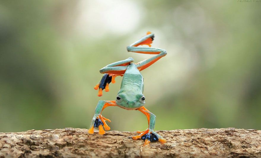 this photographer photographs frogs