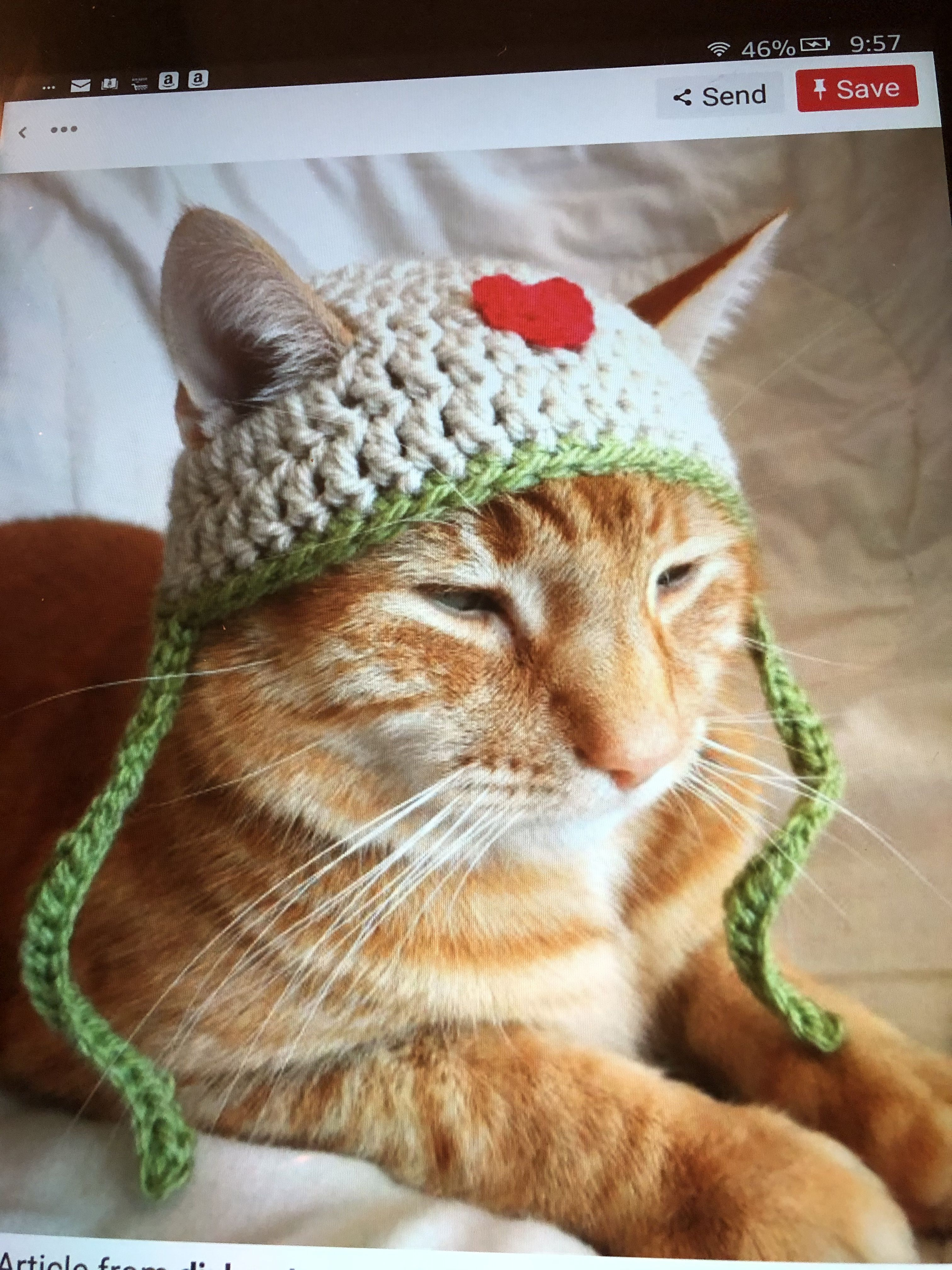 Pin By Katie Williams On Animals In Attire Crochet Cat Hat Cat Hat Pattern Crochet Dog Hat