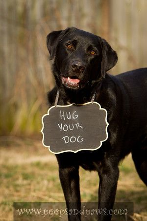 If you have a dog, please give them a big, fat, HUG!