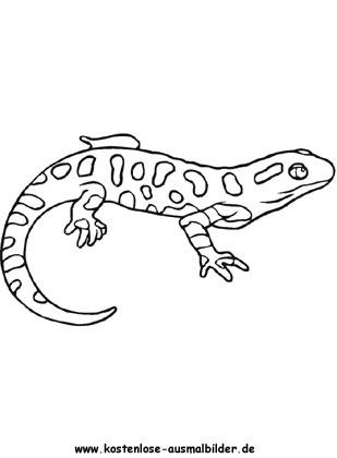 Ausmalbild Salamander Drachen Zum Ausmalen Ausmalen Ausmalbild