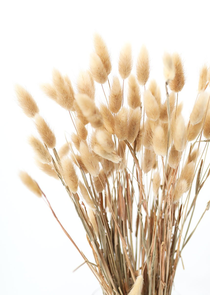 Natural Bunny Tail Grass Dried Grasses Flowers Afloral Com Bunny Tail Dried Flowers How To Preserve Flowers
