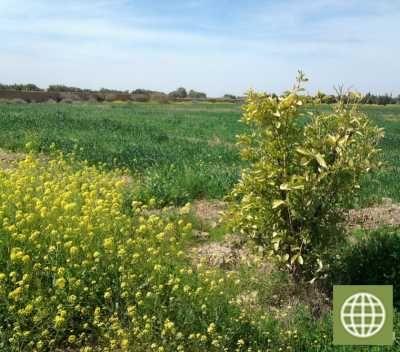 Ferme 6 hectares Marrakech 80 000 euros - frscutteu IMMO MAROC