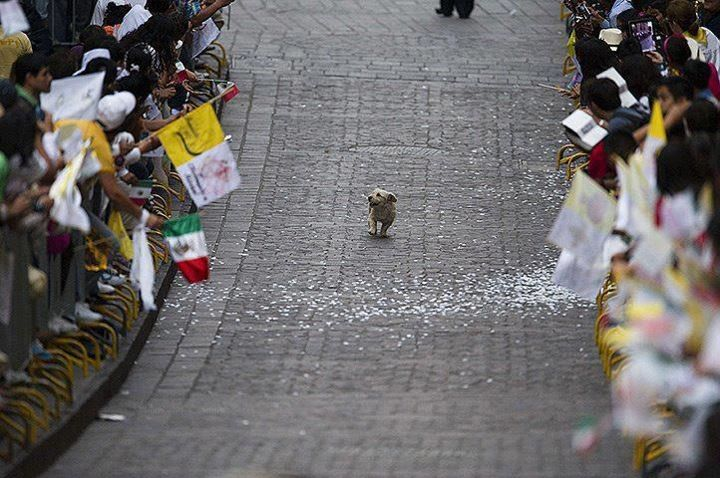 As the crowds in Mexico await the pope, somehow a pup gets the lead