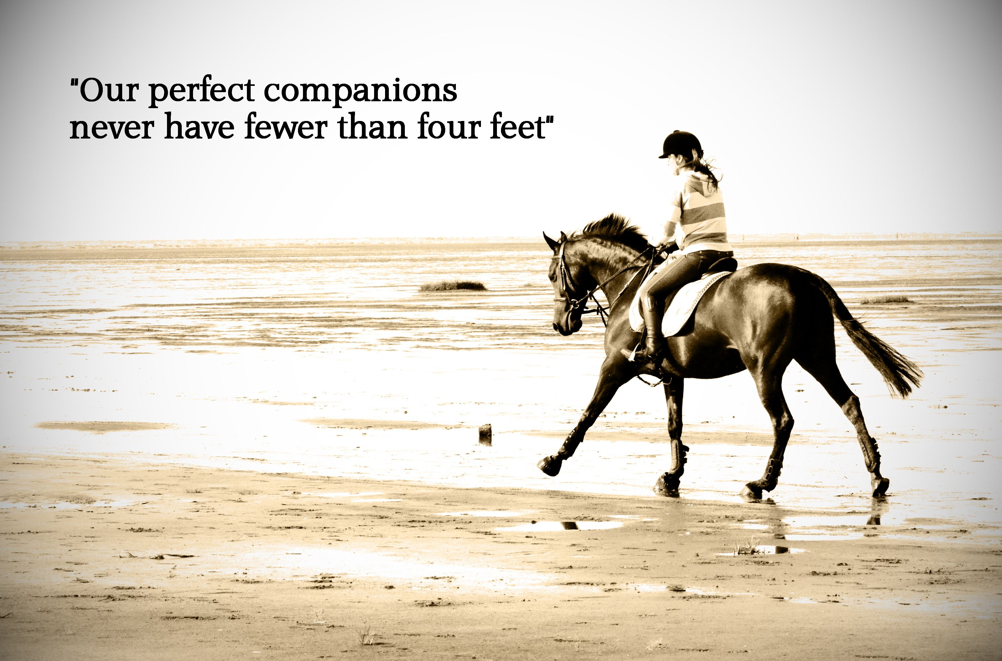 Pics photos quote i wrote for my horse com account s equestrian - Famous Quotes Horse Beach Horse Riding