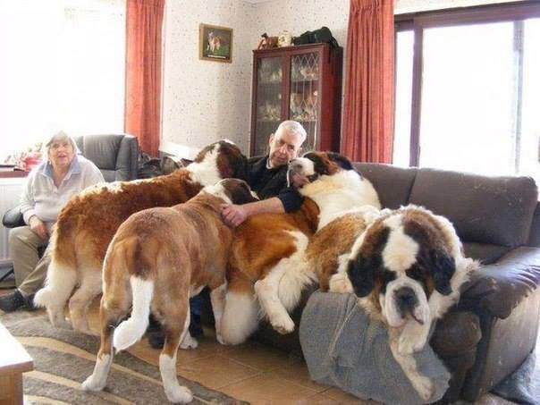 Bernadine Love Massive Dogs Giant Dog Breeds Cute Dogs