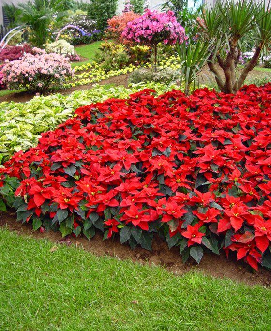 Claves para elegir plantas para nuestro jardín Arquitectura y