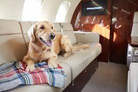 Dog flying alone in a private jet