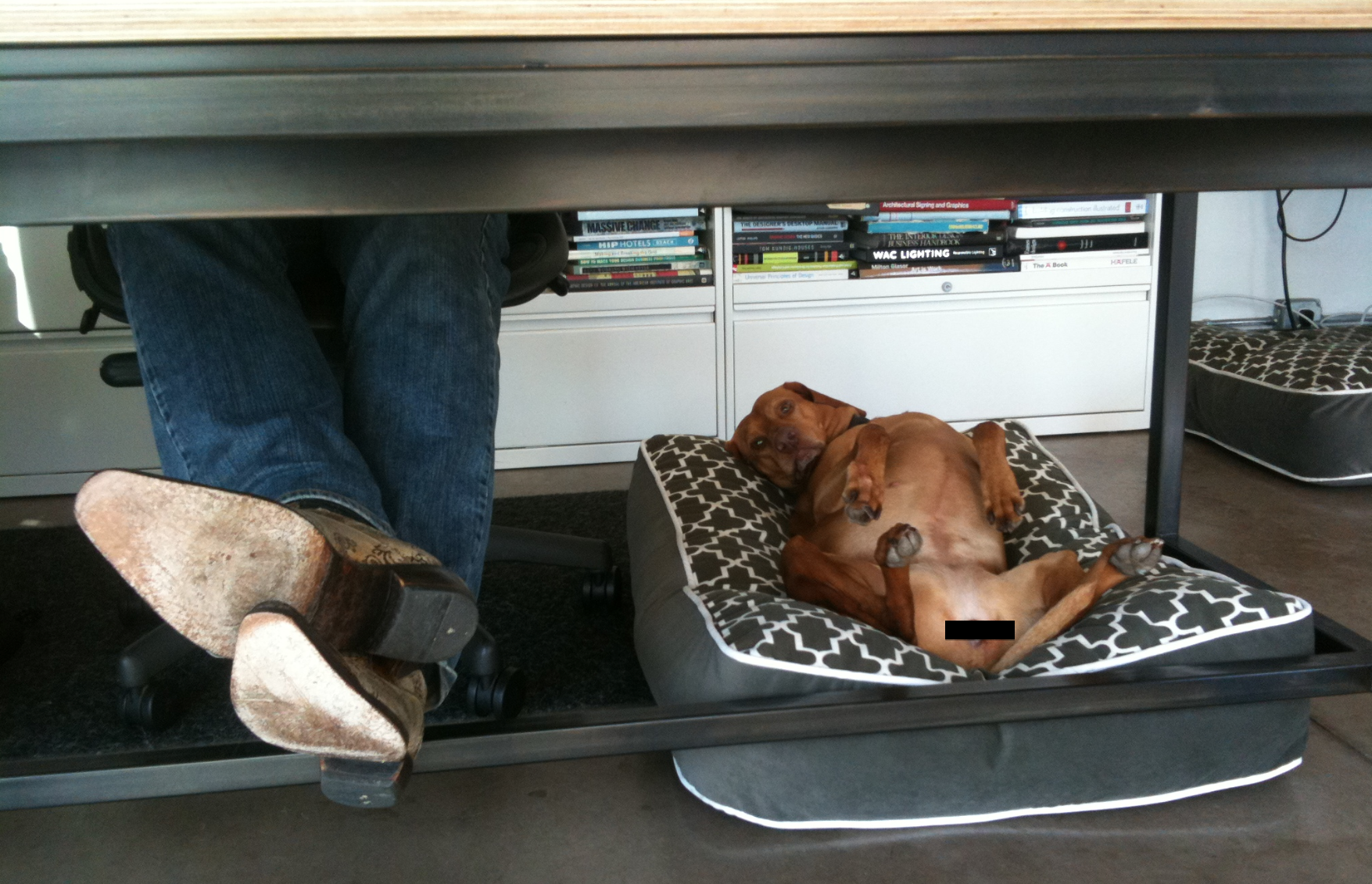 Service Dogs in the Office: How to Make It Work