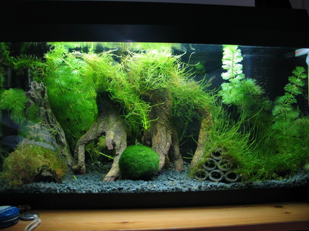 10 Gallon Fish Tank Aquascape Idea With Java Moss Trees And Tire Playground For A Betta Via Fishlore Co Fresh Water Fish Tank 10 Gallon Fish Tank Fish Tank
