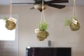 Image result for hanging wall garden indoors