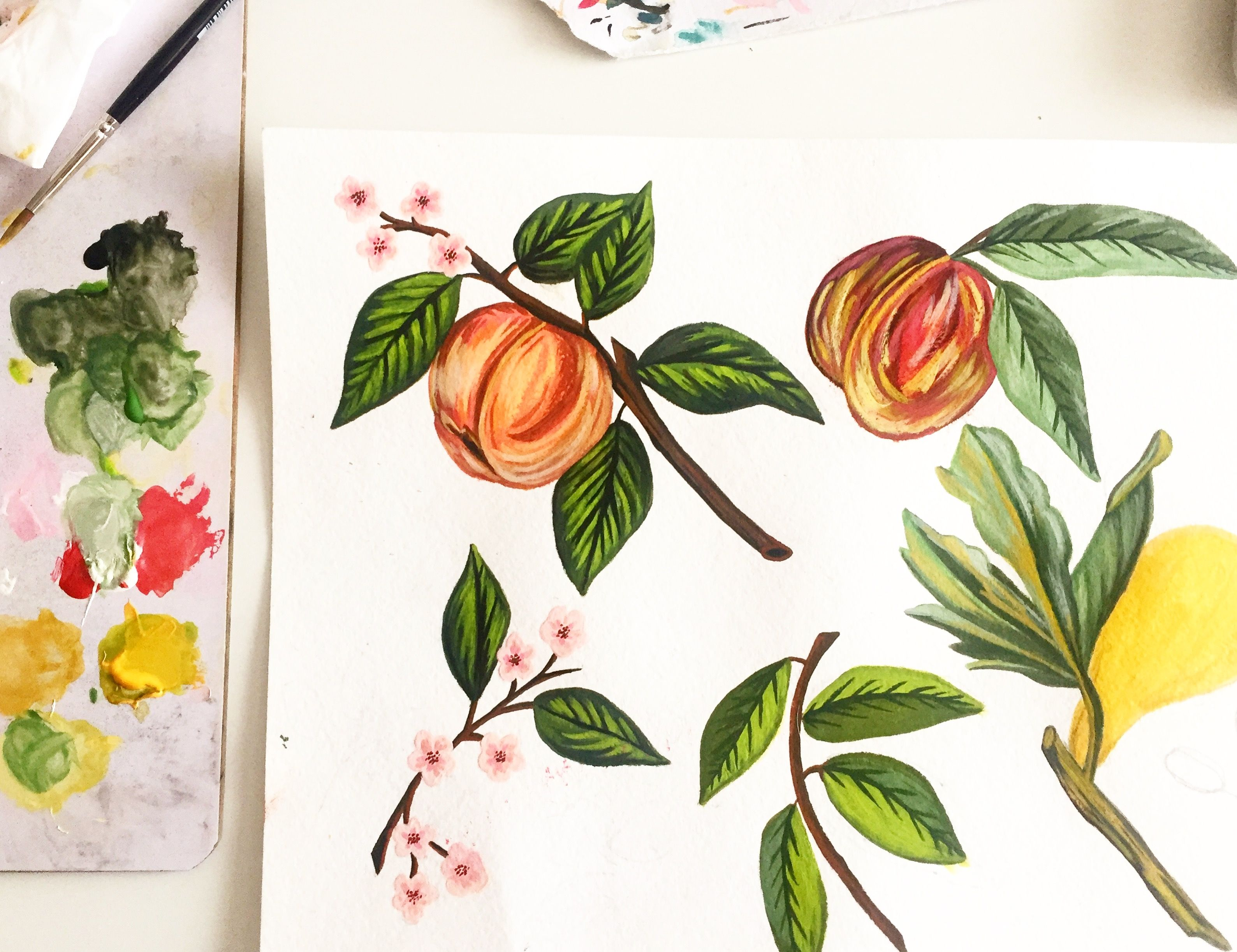Simply Botanical Fruits Hand Painted With Gouache Gouache
