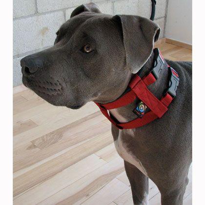 Cesar Millan Illusion Dog Collar Leash System Dog Collars