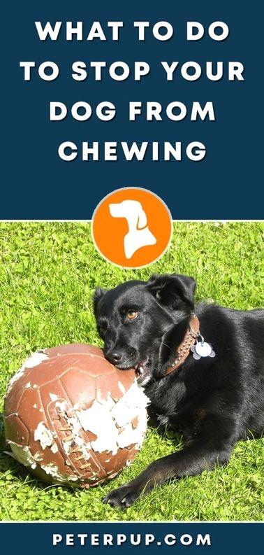 Large Dog Training Collar Dog Training Off Furniture Dog