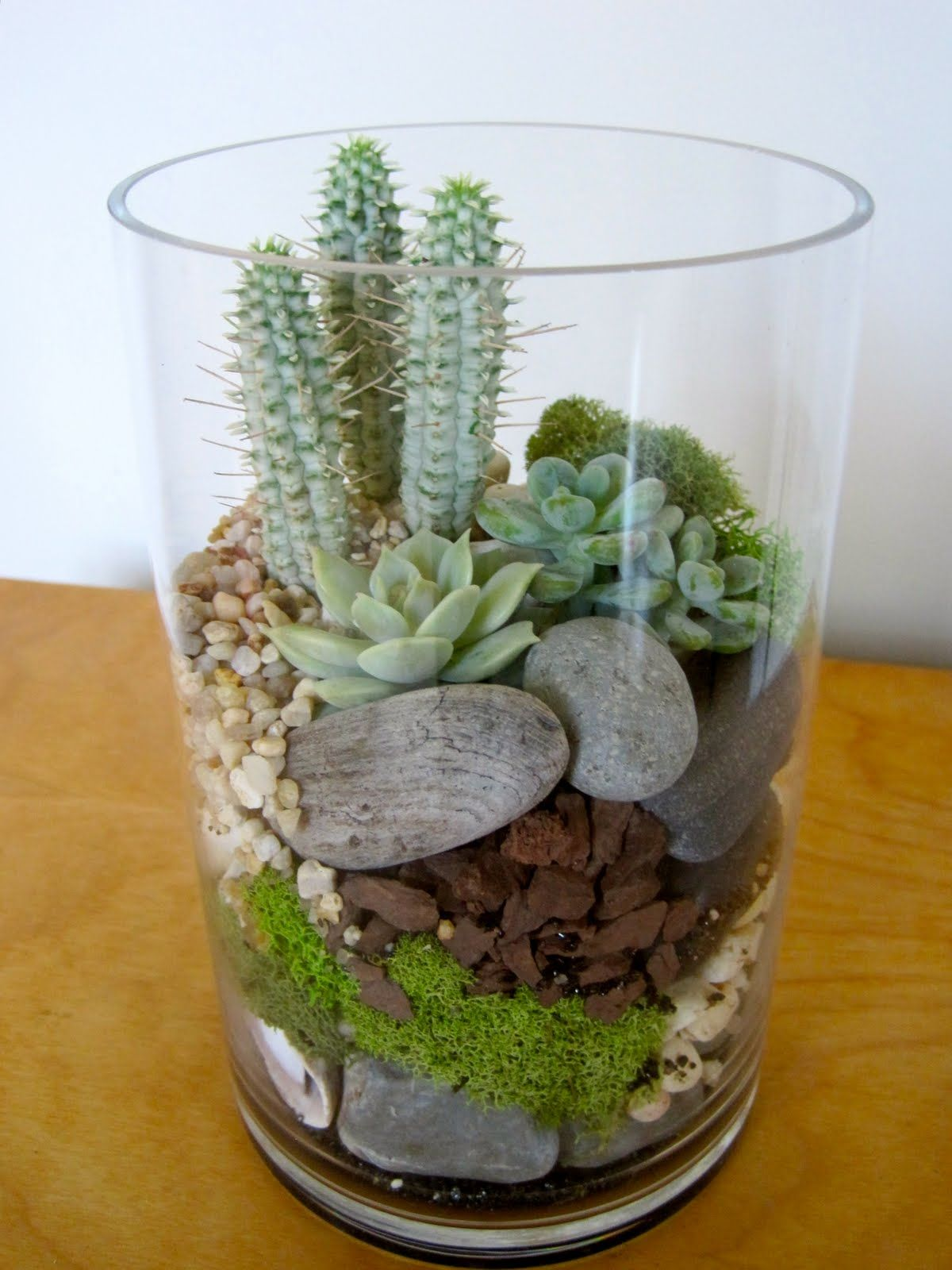Succulent And Cactus Terrarium With River Stones And Moss Inside
