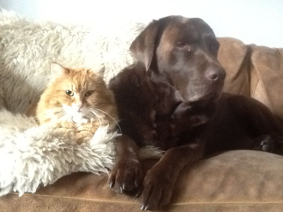 Our 11 years old chocolate girl Sascha with Rody the cat. Best buddies ever!