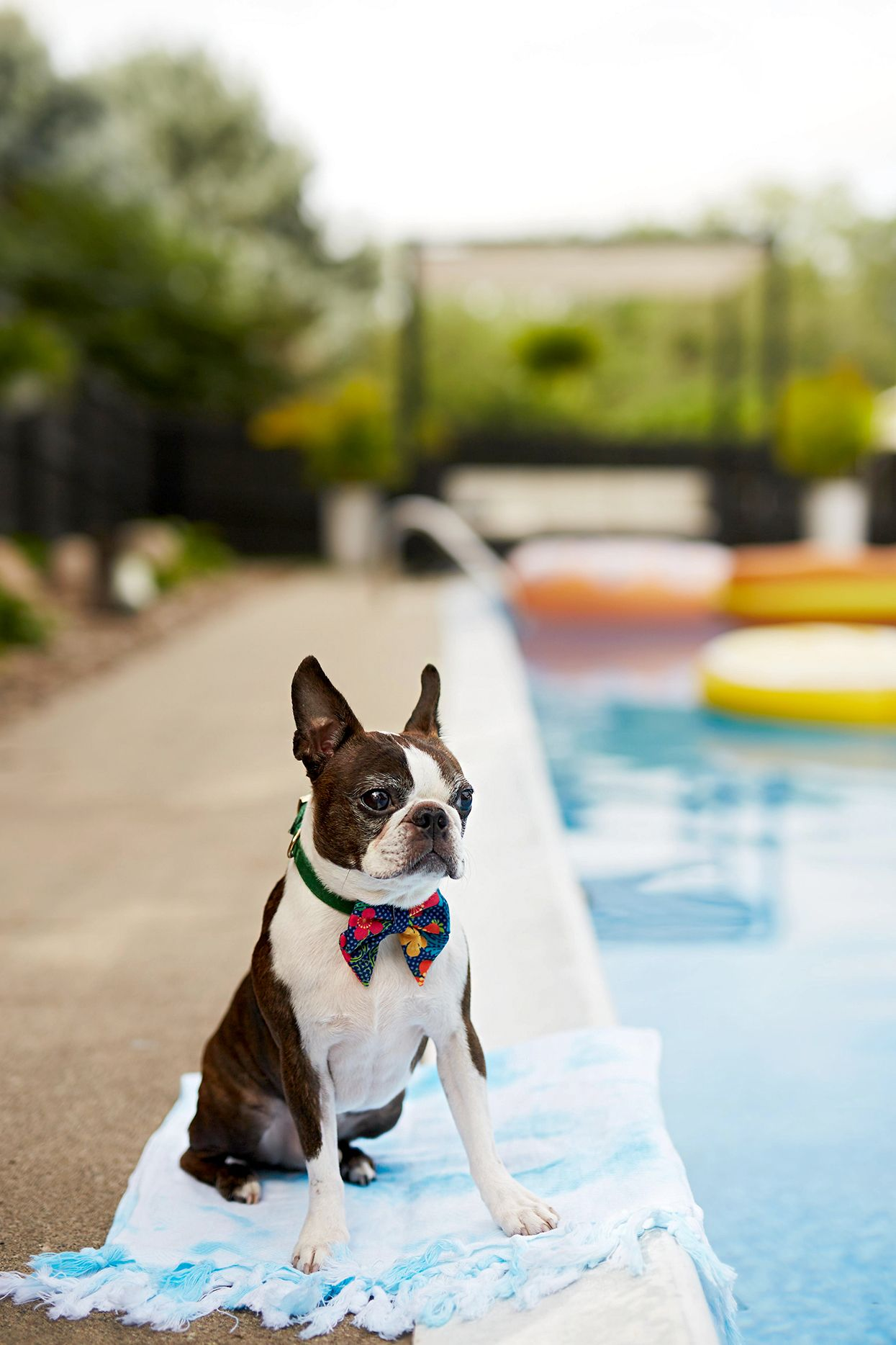 10 Genius Diy Ways To Keep Your Pet Cool In The Summer Pets Your Pet Dogs