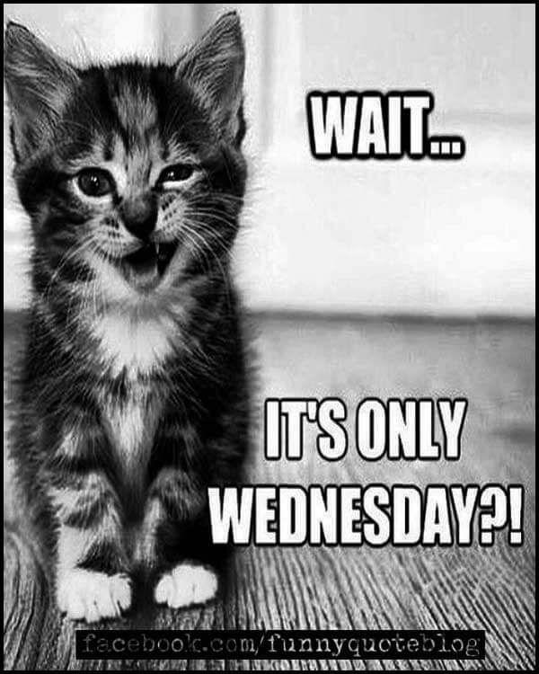 Funny Wednesday Memes : funny, wednesday, memes, Funny, Wednesday, Meme,, Images,, Pictures, Photos, Memes,, Quotes,, Memes