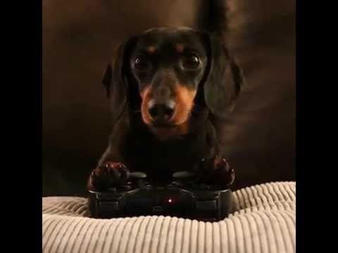 Dog Playing Video Game Crusoe Kills A Zombie Crusoe The
