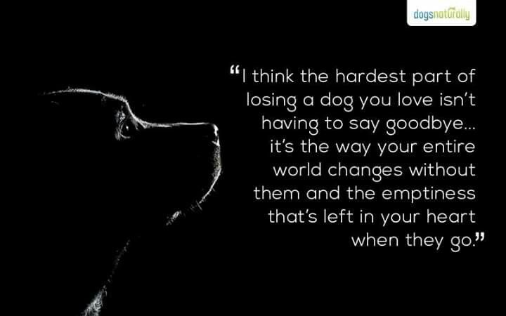 Saying Goodbye To Your Best Friend Pet Quotes Dog Dog Quotes Losing A Dog