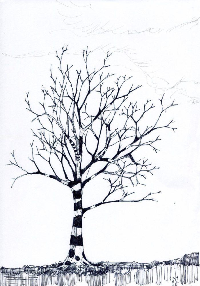 Tree Series Tree drawing, Realistic drawings, Drawings