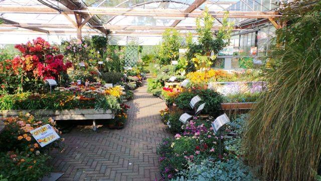 Vieni a Scoprire tutte le foto dei fiori e delle #piante, presenti presso il nostro Peraga Garden Center di Mercenasco...