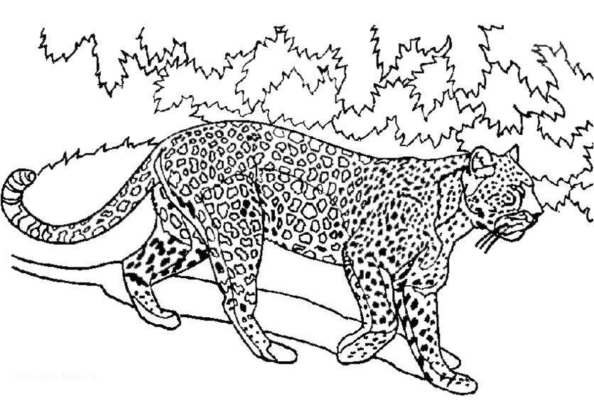 tiger zum ausmalen | Les Animaux | Pinterest | Ausmalen ...