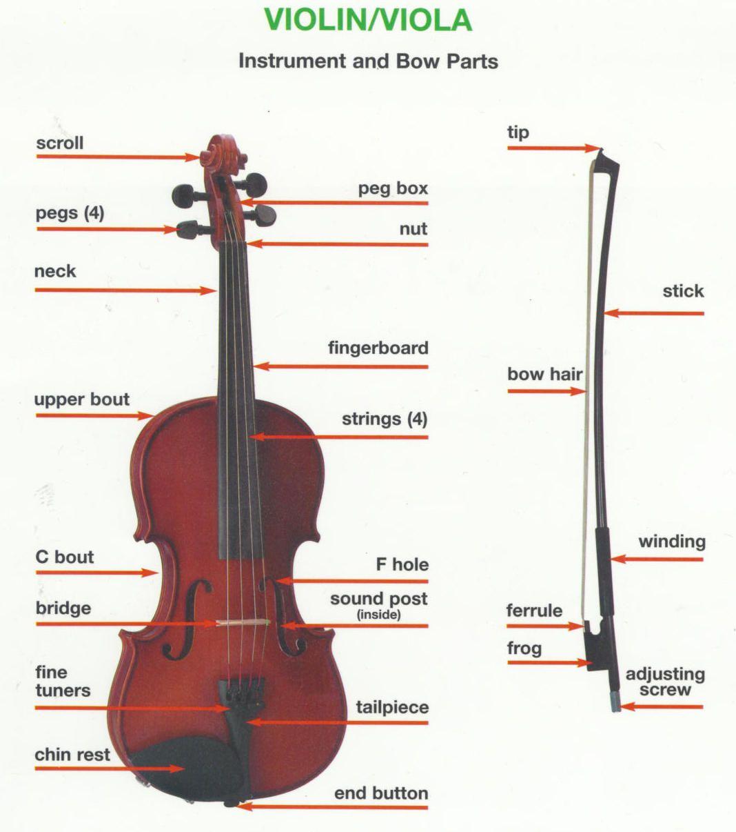 Parts Of The Violin Worksheet