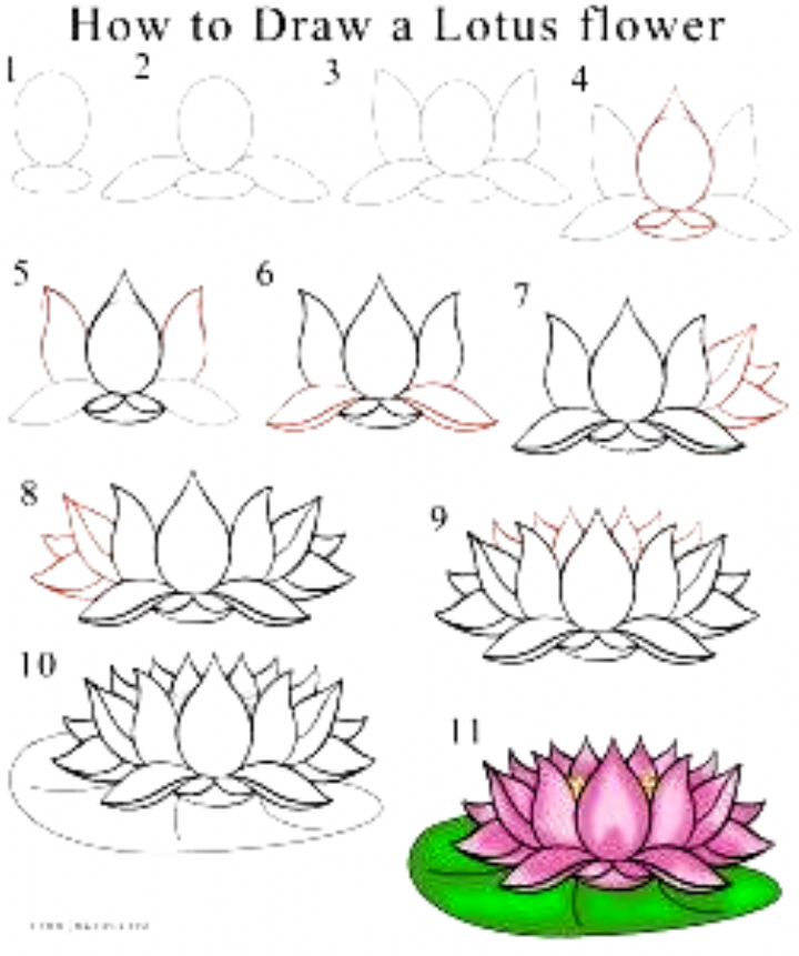 How to Draw Lotus Flower Step by Step Drawings in 2020