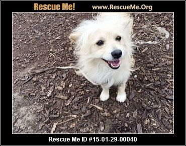 Rescue Me ID: 15-01-29-00040Oliver (male)  Maltese Mix  Age: Puppy  Health:Neutered, Vaccinations Current  Meet sweet, fun loving Oliver! Oliver is a male, 13 lb., 1 yr. old, Maltese and Pomeranian mix...aka 'Maltipom' Oliver was found and rescued from a wonderful rescue group 'Hope For Paws'! Oliver had been abandoned at a construction site and was wandering around alone! (see and read of Oliver's rescue below) Poor Oliver, alone, cold and scared until Eldad and Lisa from Hope for…