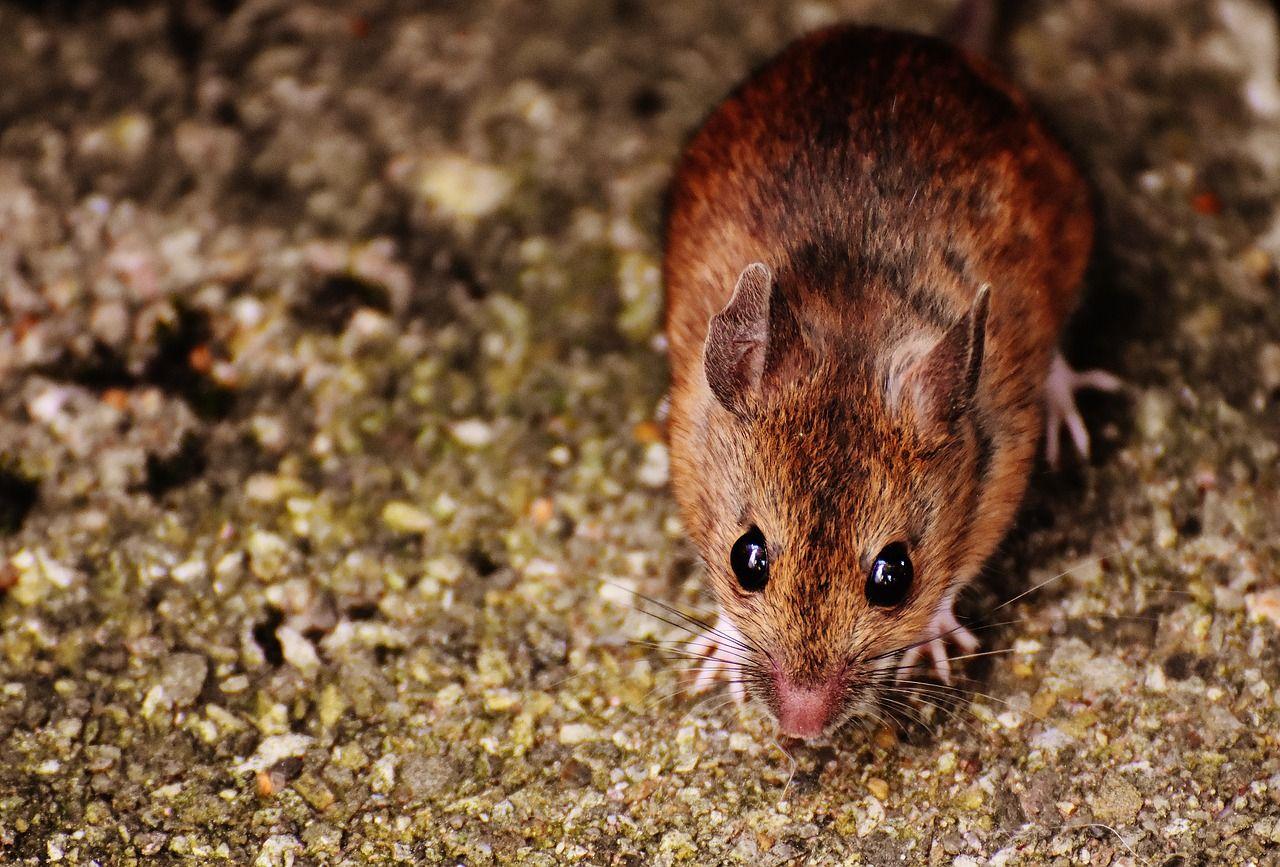 a3aaa5bb1ebb49ad48b08fbb5e8d6781 - How To Get Rid Of Mice In Compost Bin