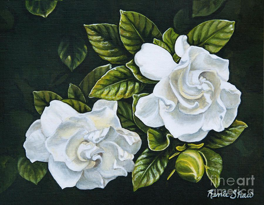 White Gardenia By Renee Shaw With Images Botanical Art White
