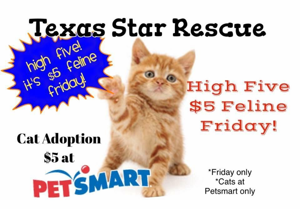 5 Feline Friday On Friday June 26 All Of The Current Cats At Petsmart In Longview Texas Will Have A 5 Adoption Fee Friday Cat Cat Room