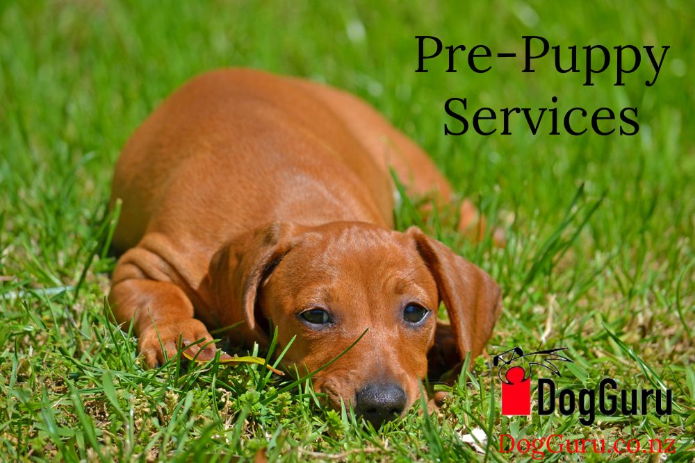 Our prepuppy service will help you get ready for a puppy