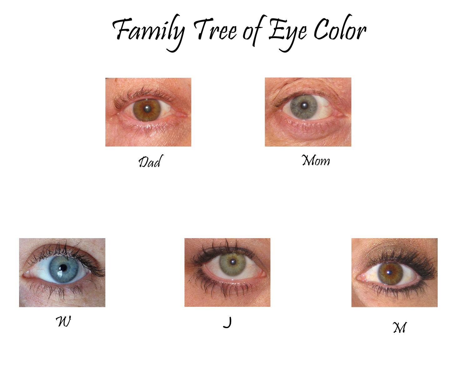 Real Eye Color Chart | Eye Color Family Tree, the sequel ...