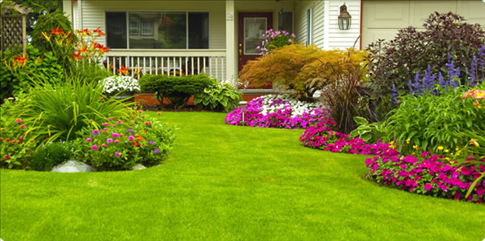 how to have a great lawn on a budget learn how to have a