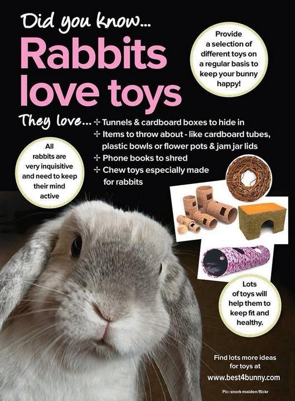 90 Rabbits Ideas Bunny Care Rabbit Care Raising Rabbits