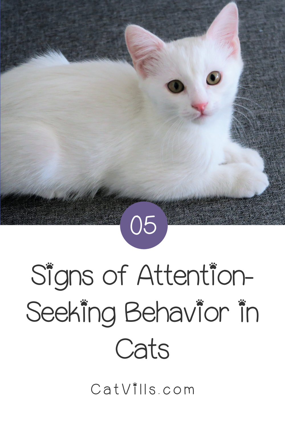 5 Signs Your Cat Needs More Attention Catvills In 2020 Cats Cat Behavior Cute Cats And Kittens