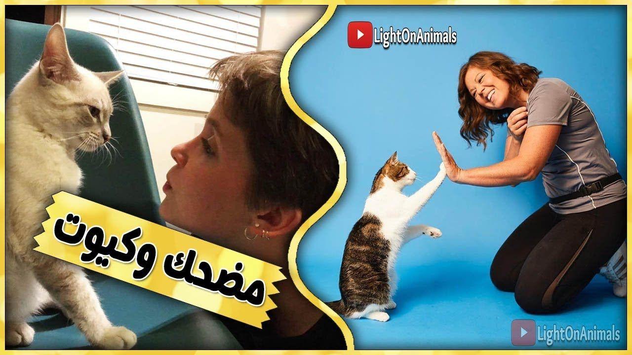 قطط مضحكة جدا اضحك مع القطط حتي البكاء 6