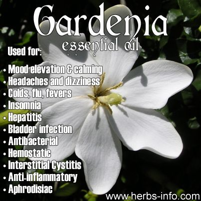 Gardenia Essential Oil Uses Phytotherapie Herboristerie Cils