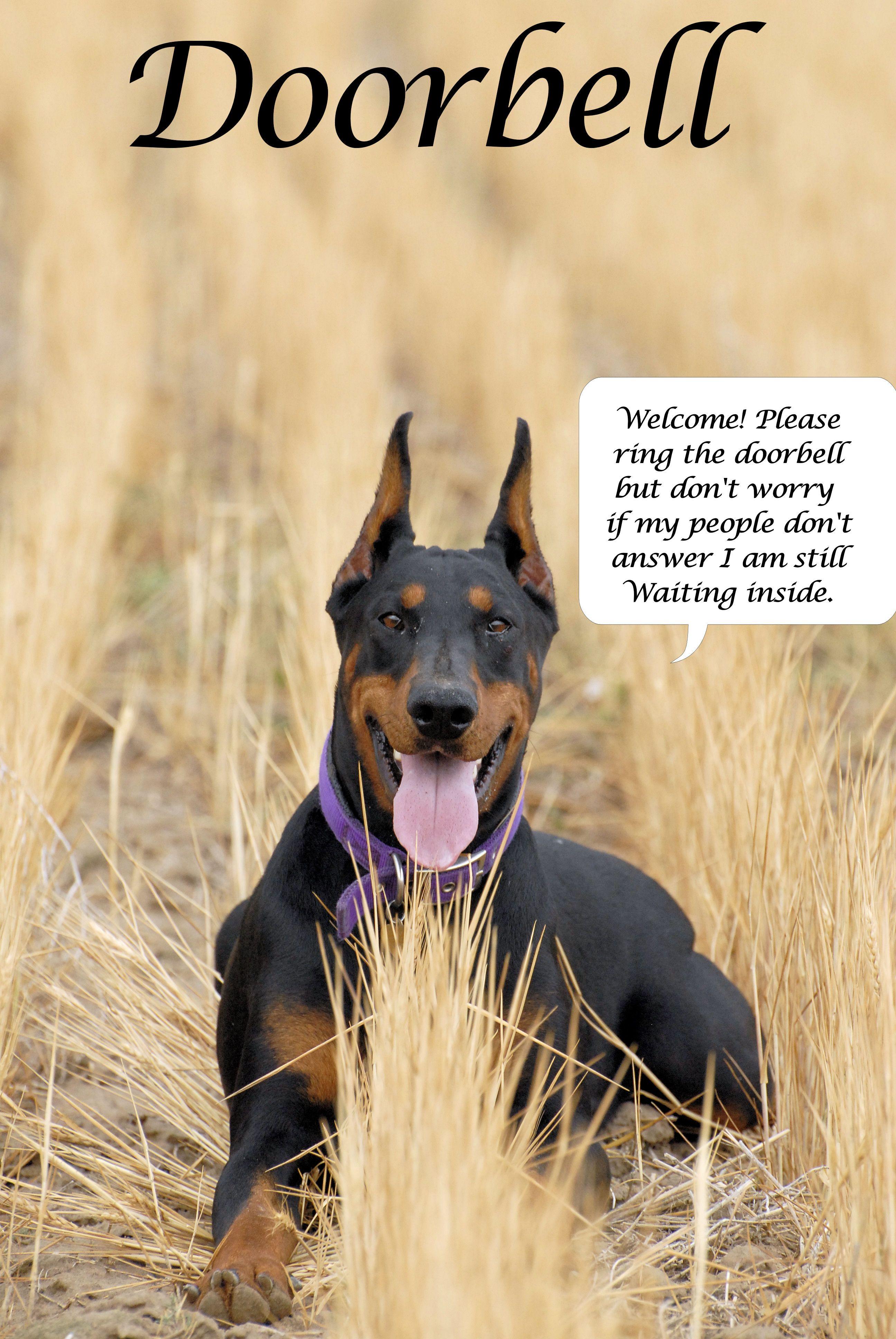 Doberman Doorbell Sign Doberman Pinscher Doberman Dogs Dogs